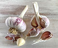 MaryJanesFarm MaryJane Garlic Seed