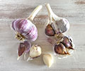MaryJanesFarm Red Gourmet Garlic Seed